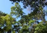 이 나무의 이름을 알 …