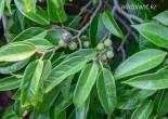 무슨 나무 열매인가요?